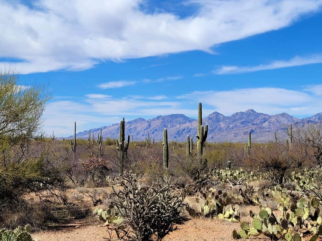 saguaro east national park is a great stop during your 48 hours in tucson