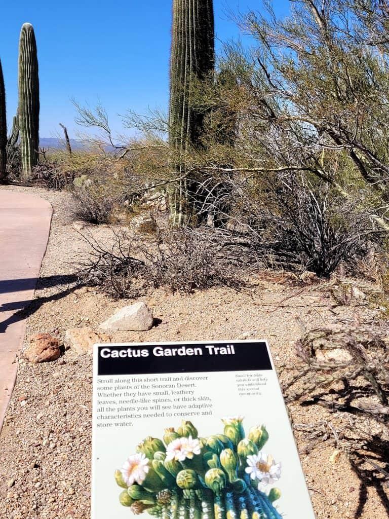 desert garden trail at saguaro west