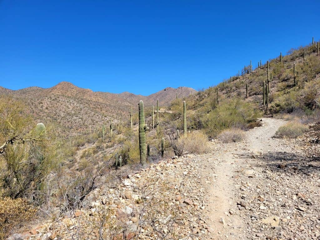 king canyon trail at saguaro west