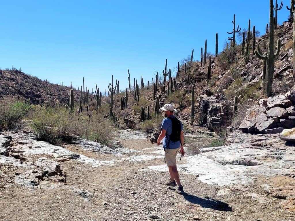 If wondering what to do at saguaro national park. hiking is great option.