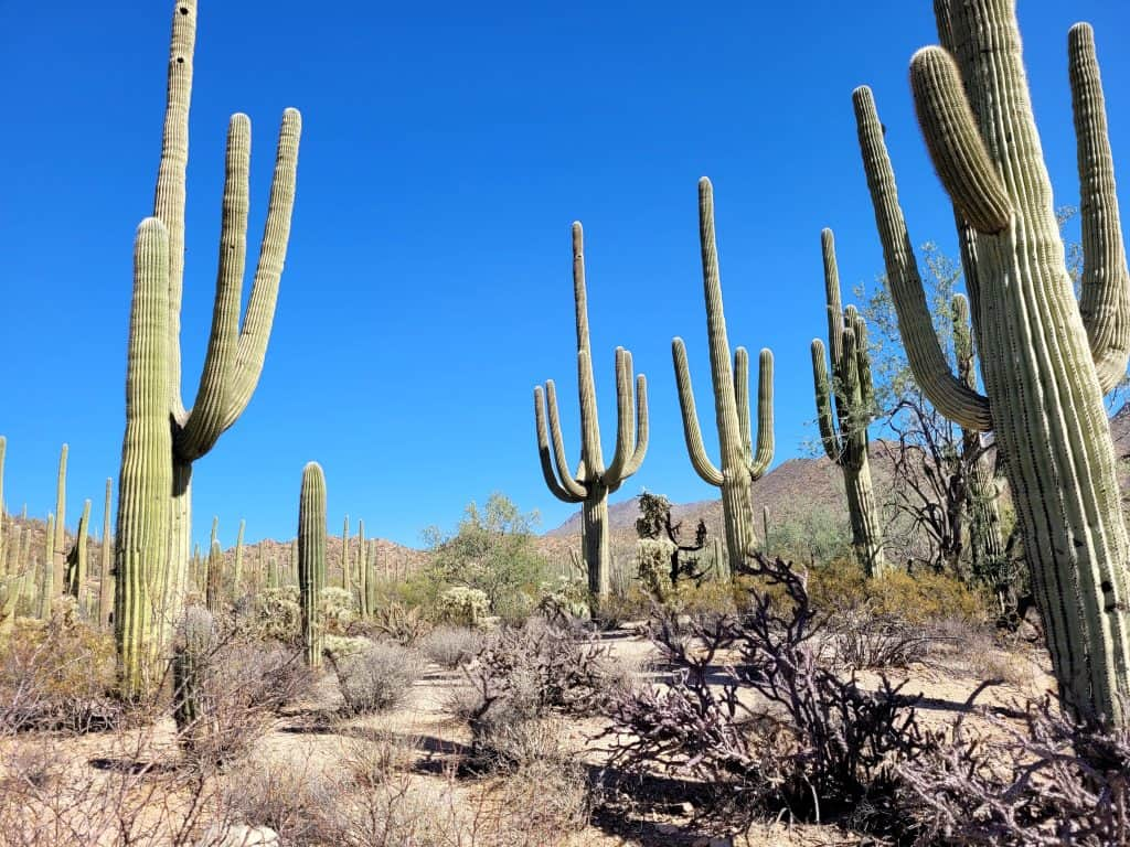 dog valley trail in saguaro west