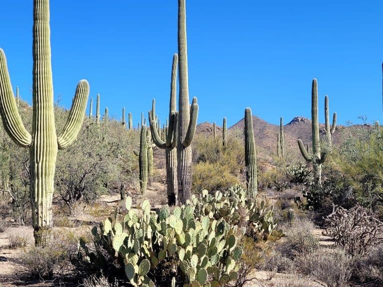 Cactus Awe: What to do at Saguaro National Park