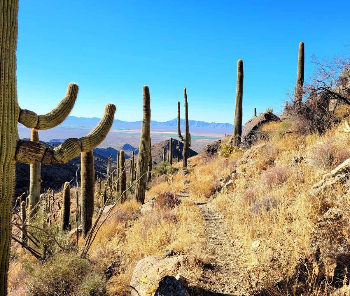 harquahala hike arizona
