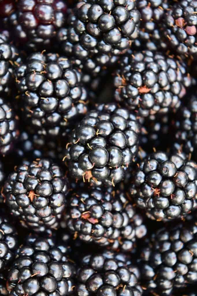 blackberries close up