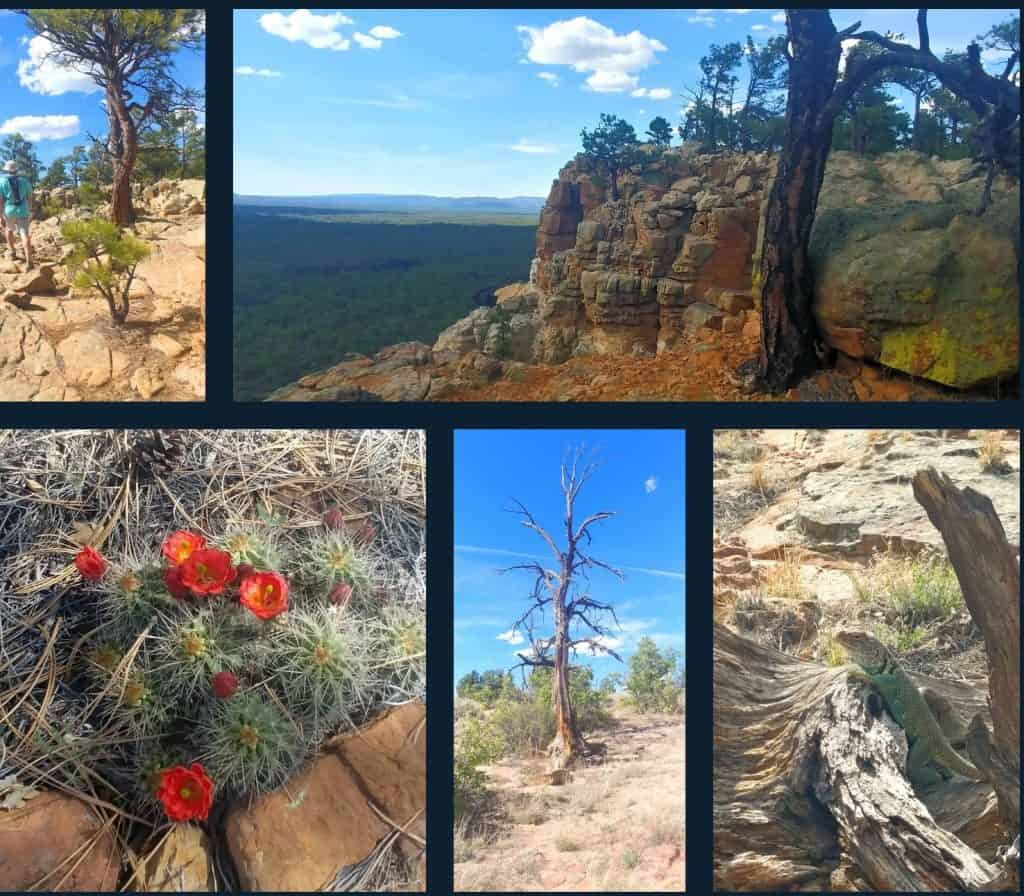 narrows rim hike at el malpais national conservation area in new mexico