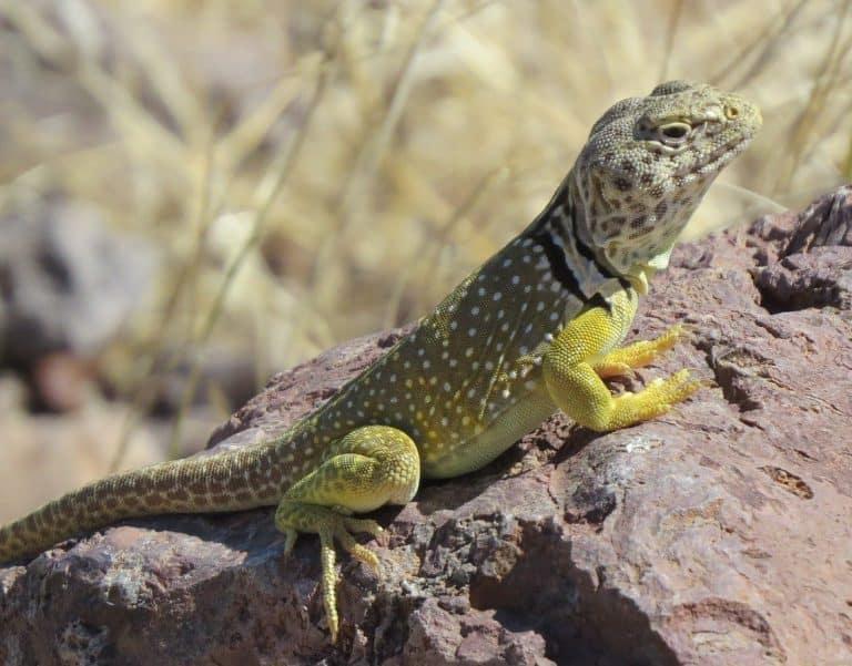 48 hours at El Malpais National Conservation Area