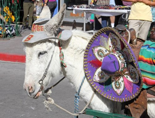 donkey in mexico border town