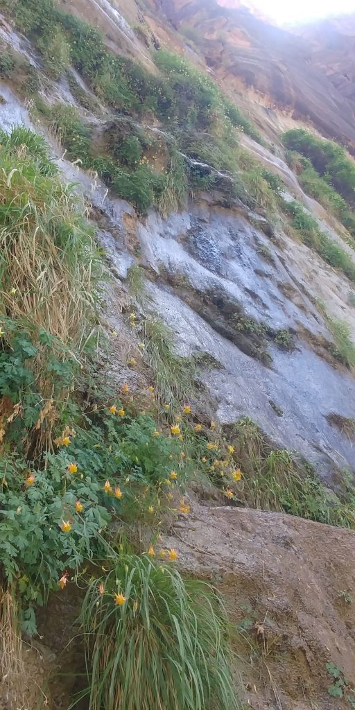wet rock covered in orange flowers along trail in zion