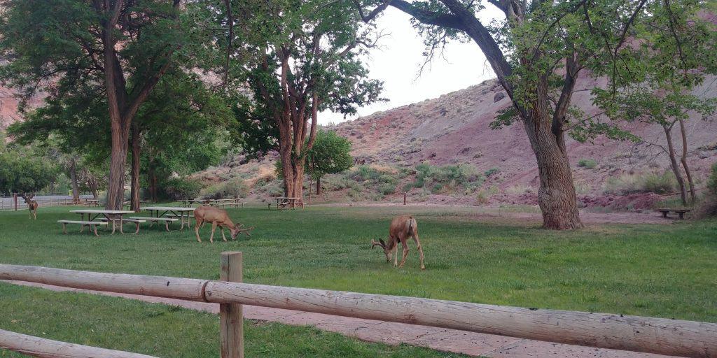 deer in fruita picnic area