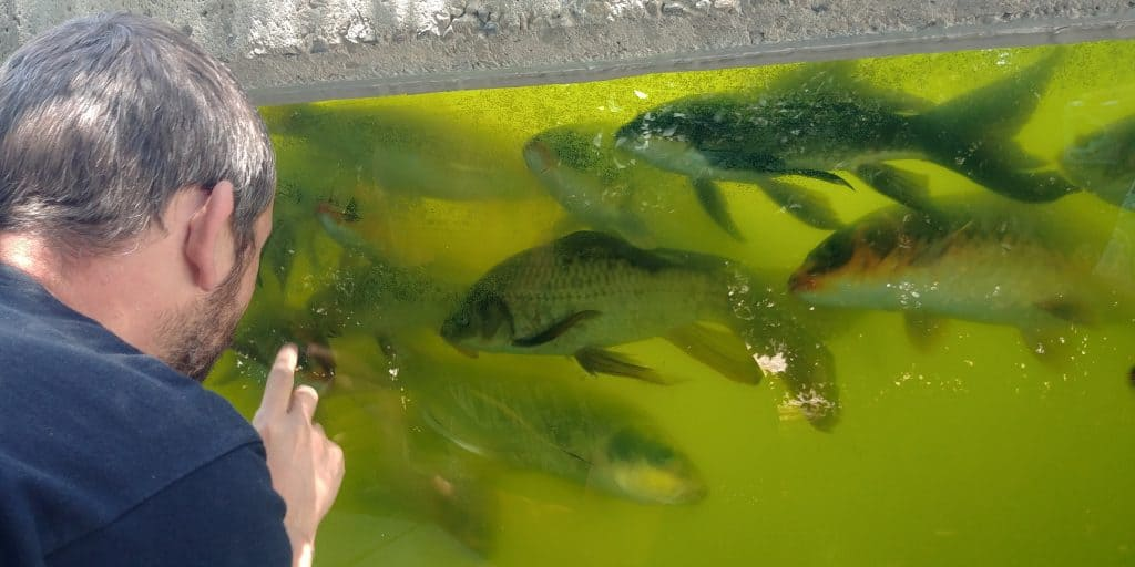 kevin playing with koi at museum of curiosity in lehi utah