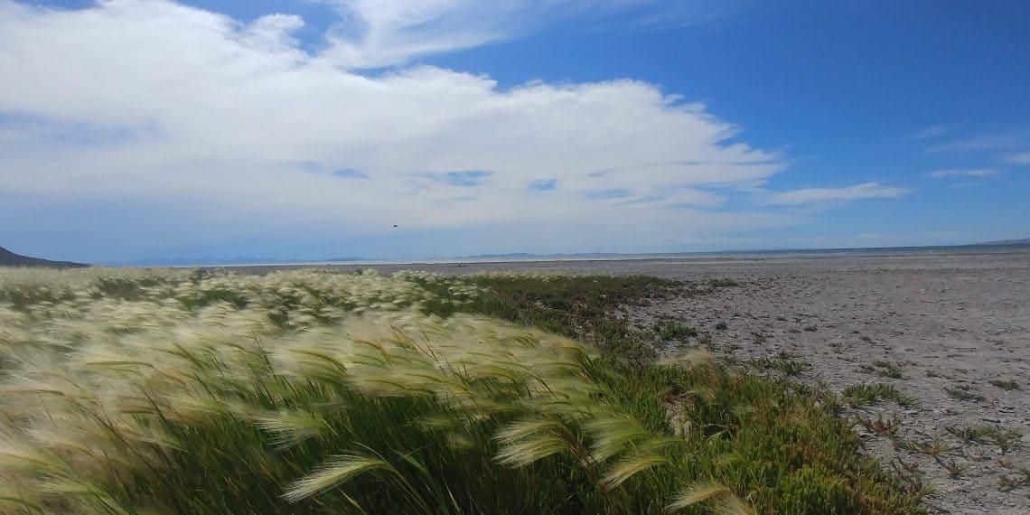 grass on bridger bay beach at antelope island state park