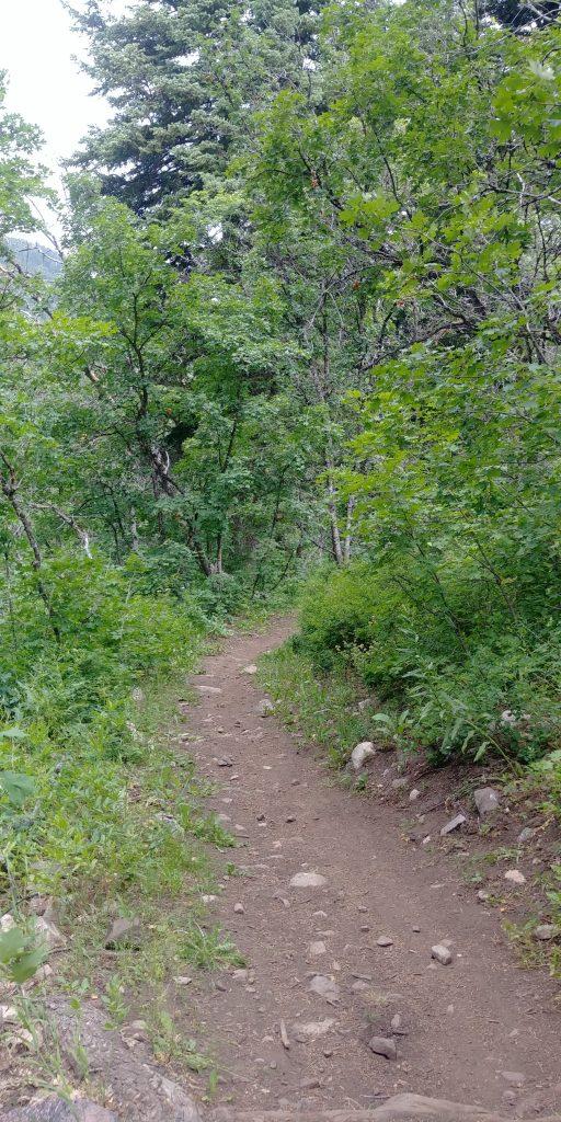 moose trail at snowbasin resort in utah
