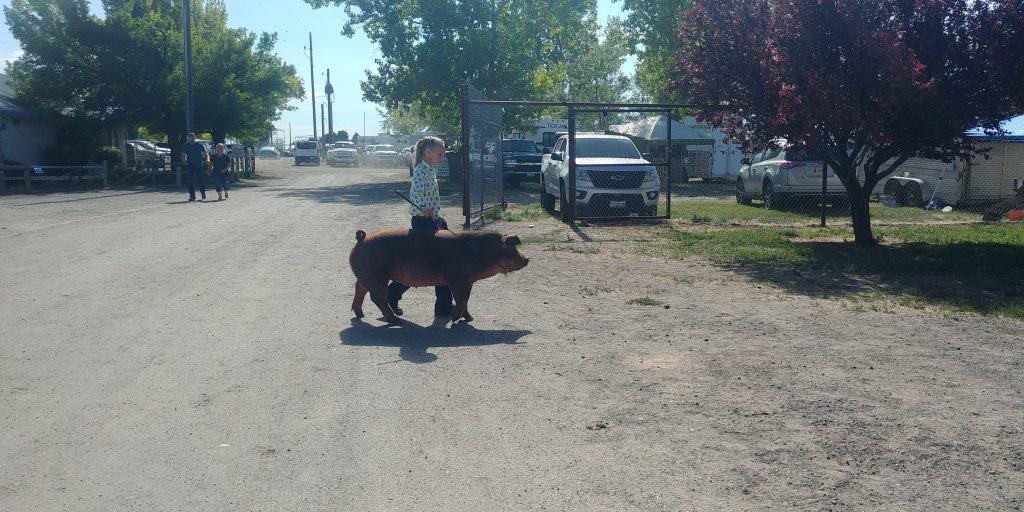 young girl walking hog