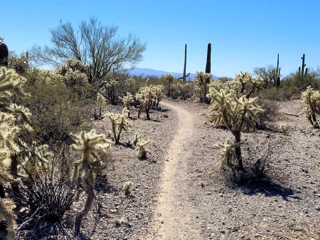 ironwood trail in tucson mountain park is a good beginner trail