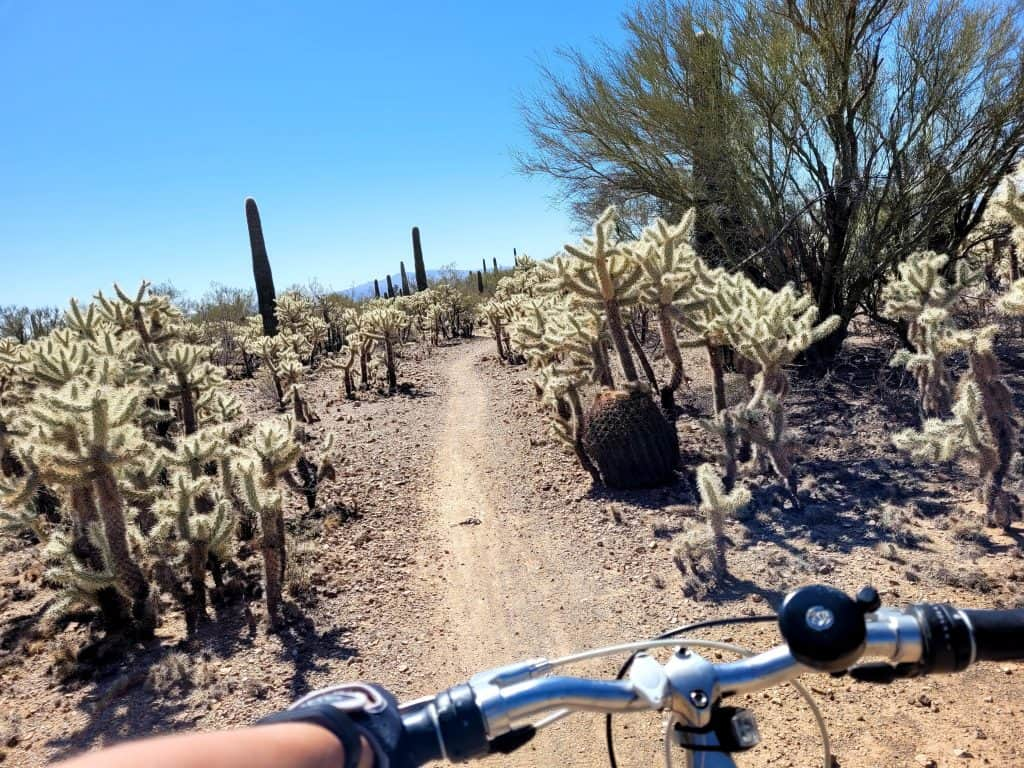tucson mountain park is worth a visit if you have more than 48 hours in tucson and want to get in a bike workout