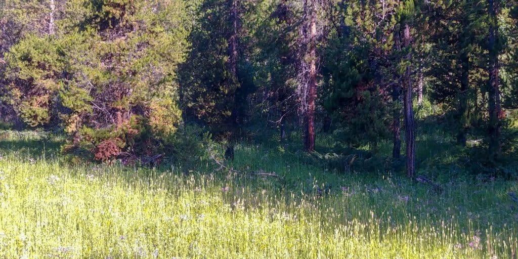 roadside bear sighting in yellowstone