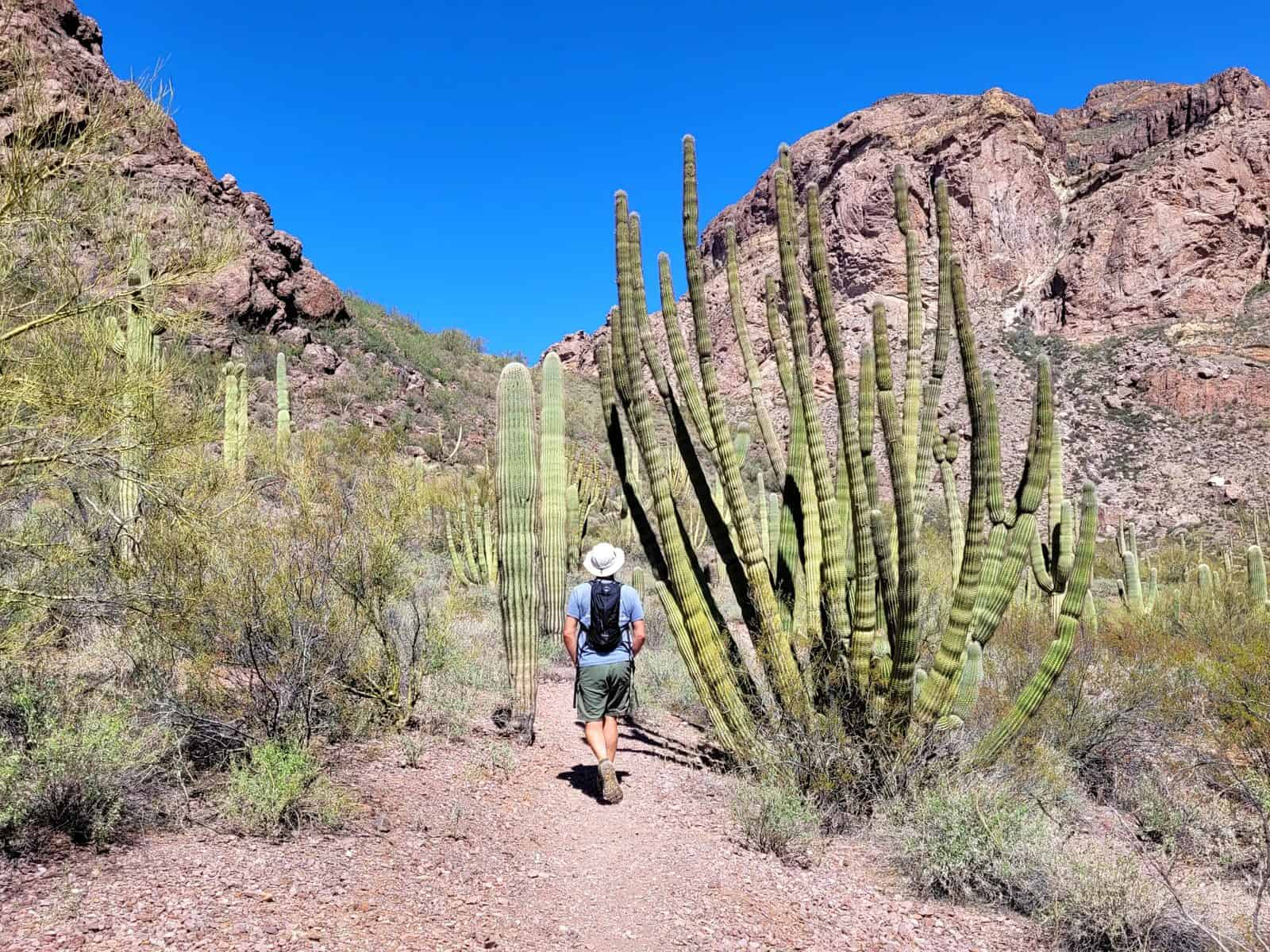 kevin on estes canyon trail at organ pipe cactus national monument