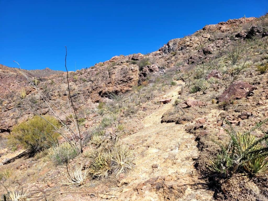most of bull pasture trail is uphill at organ pipe cactus national monument