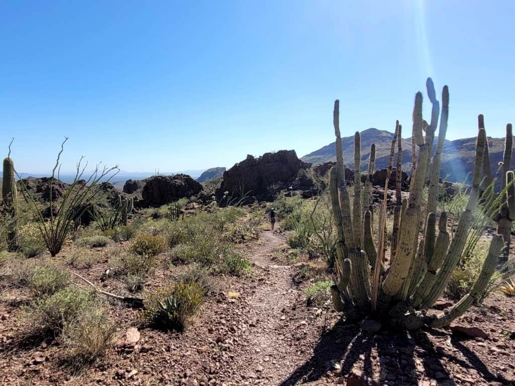 bull pasture trail at organ pipe cactus national monument