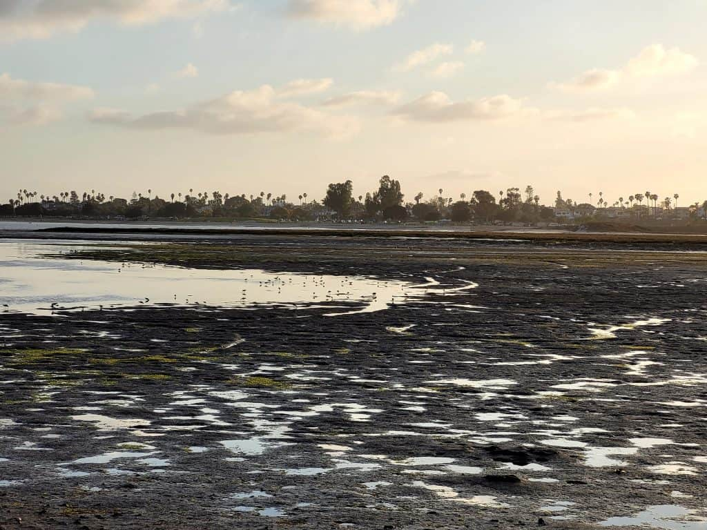 mission bay at low tide