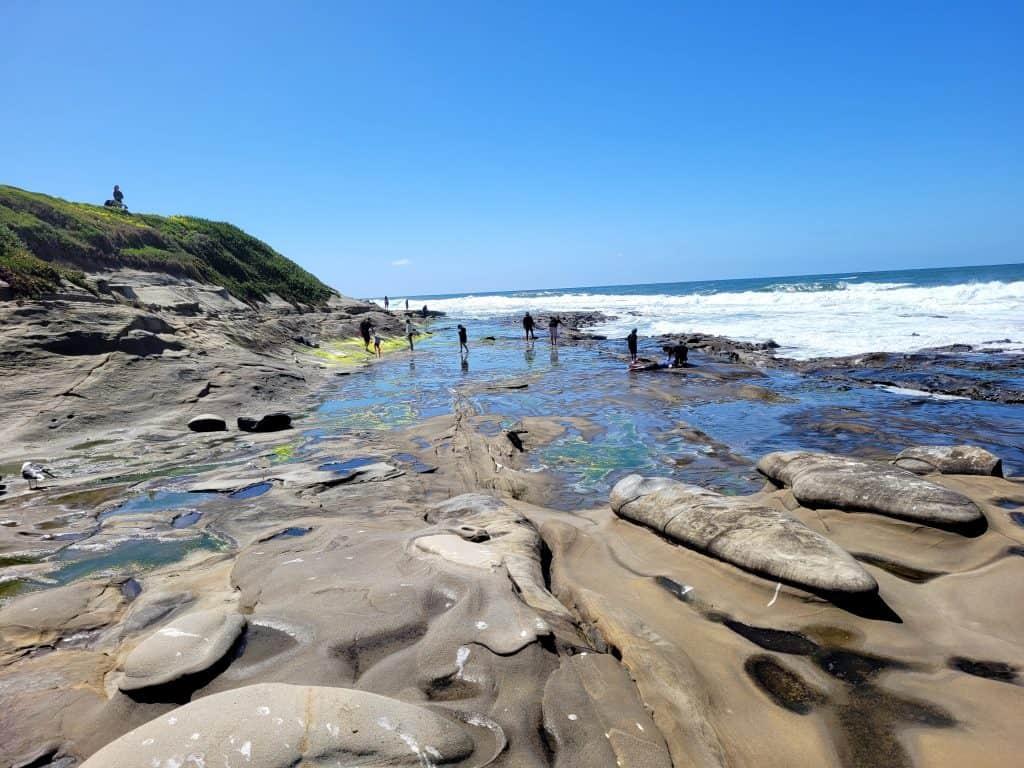 people searching the tide pools in la jolla