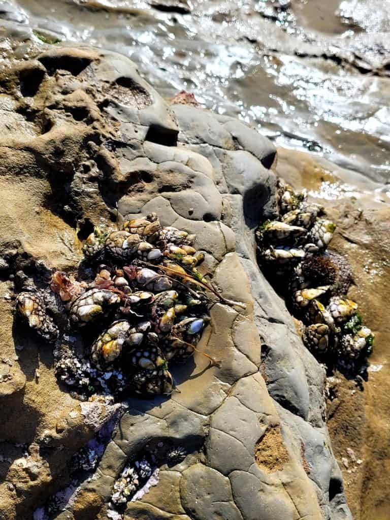 exploring the sea life in the tidepools at cabrillo is a top thing to do