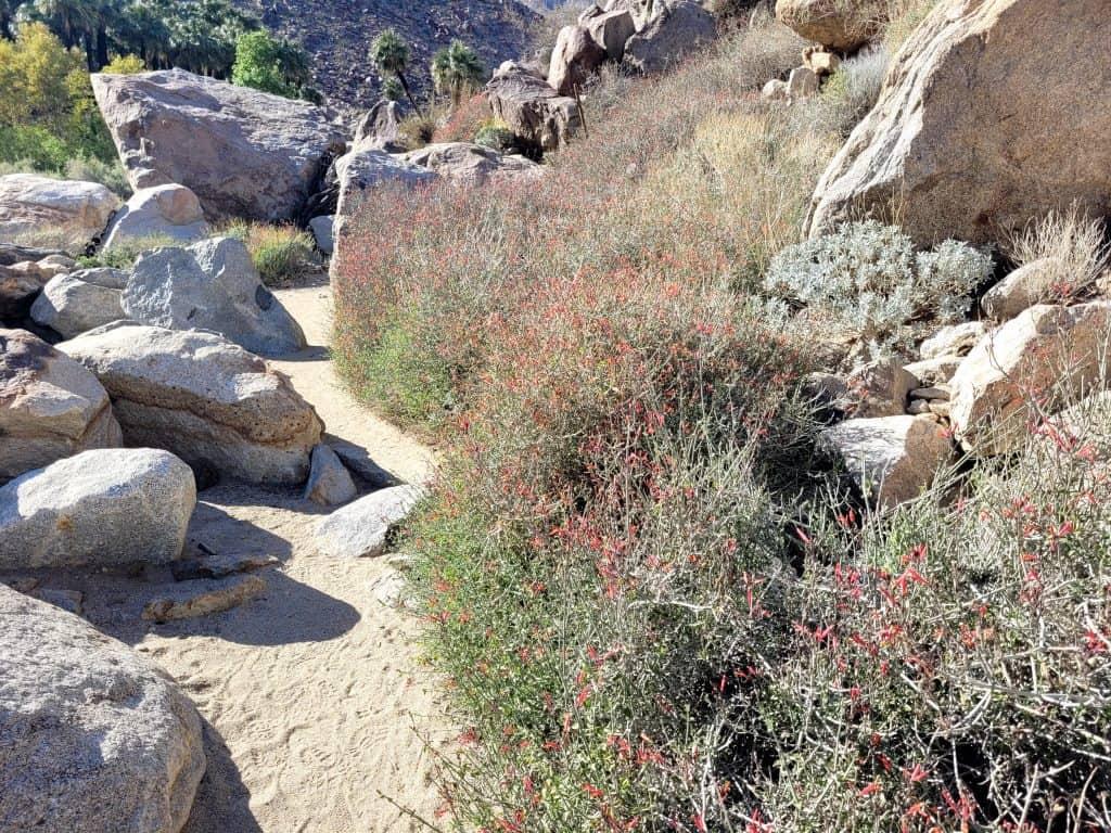 borrego springs palm trail