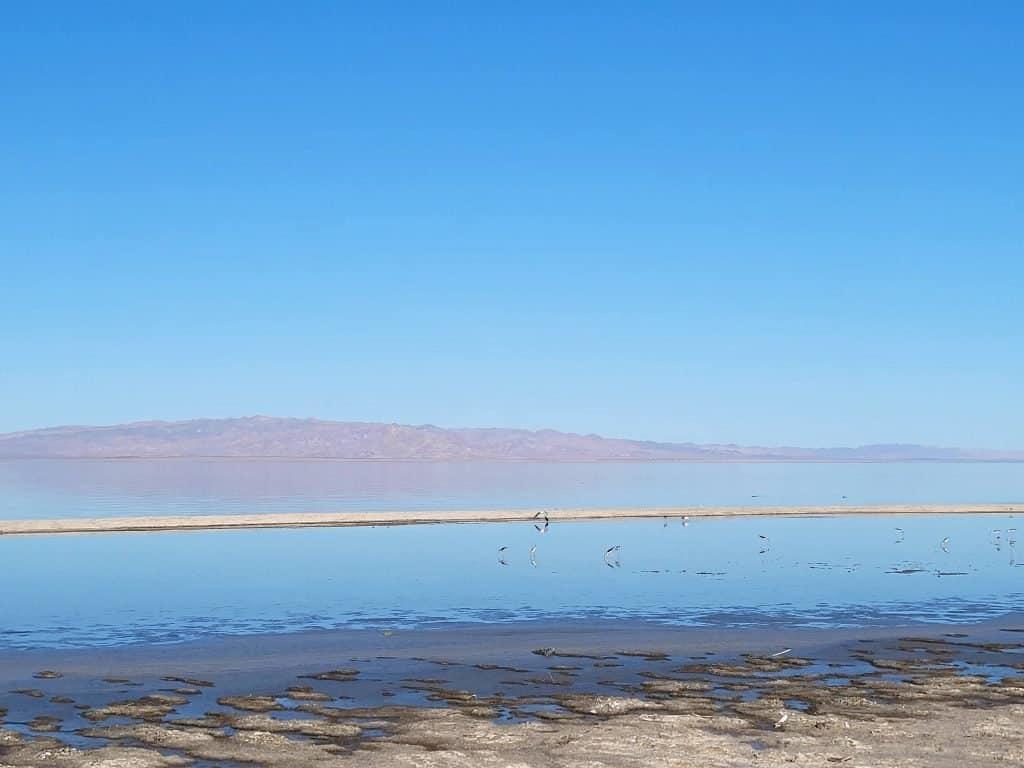 birds along water edge at salton sea in california
