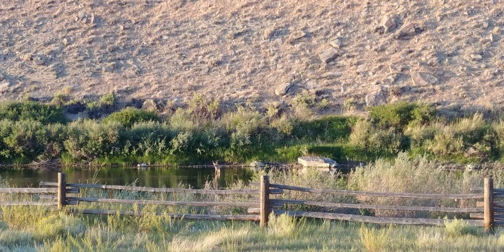 deer crossing the river near our campsite at dugway campground near sinclair and rawlins wyoming