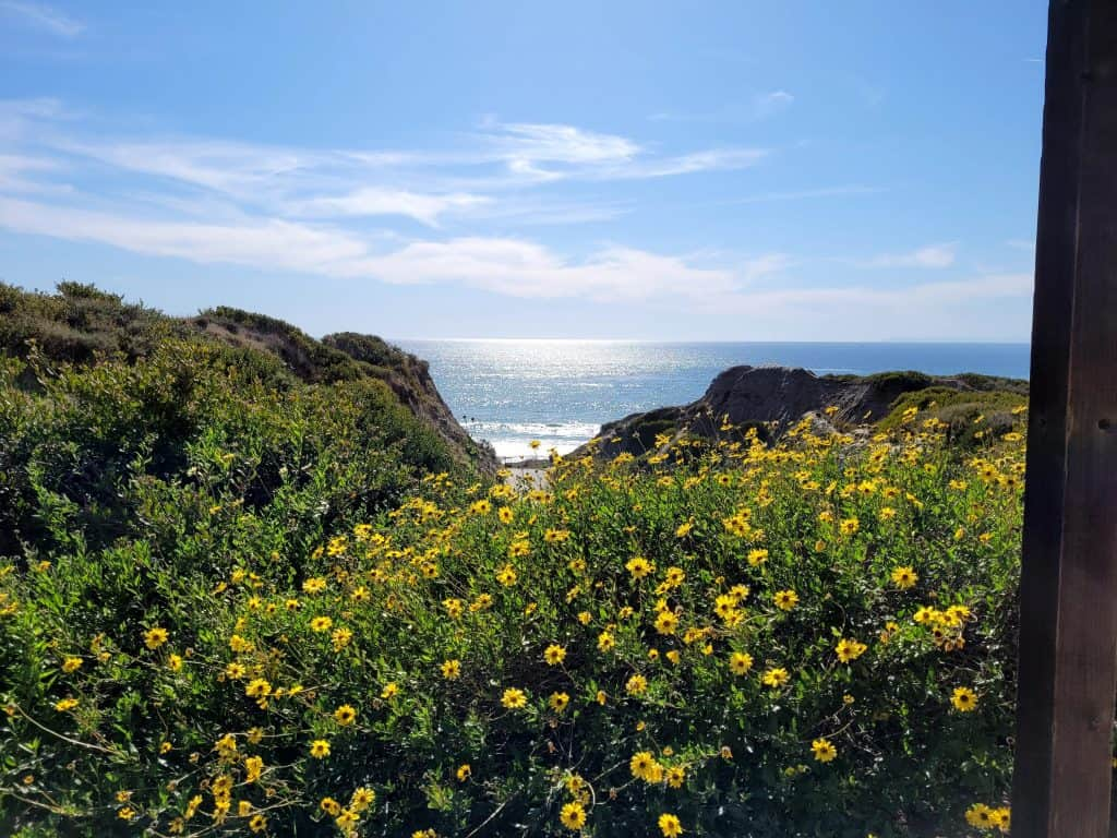 wildflowers on california beach top cliff in san clemente