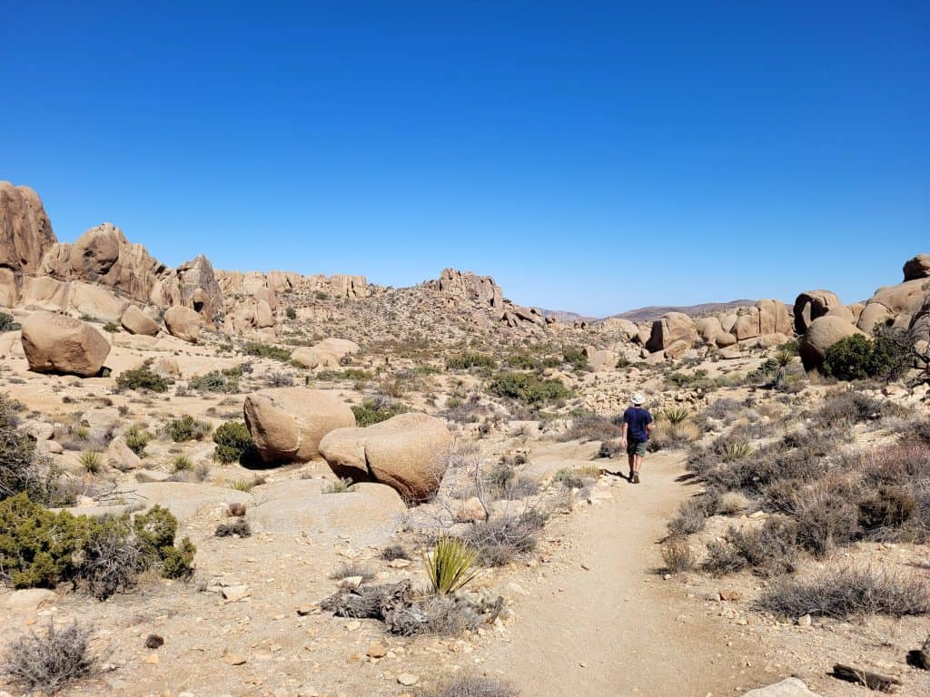 if you only have one day at joshua tree, you can still fit in a hike or two.