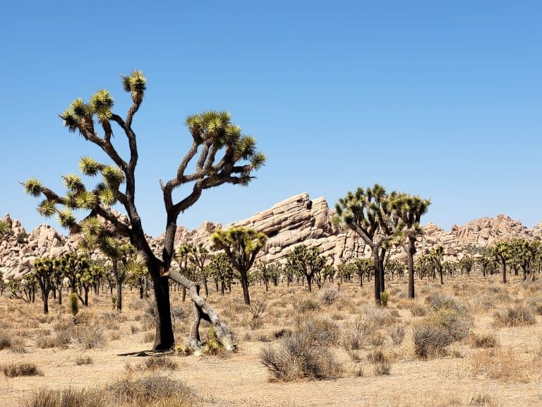Joshua Tree in a Day: Everything You Need to Know Before You Visit