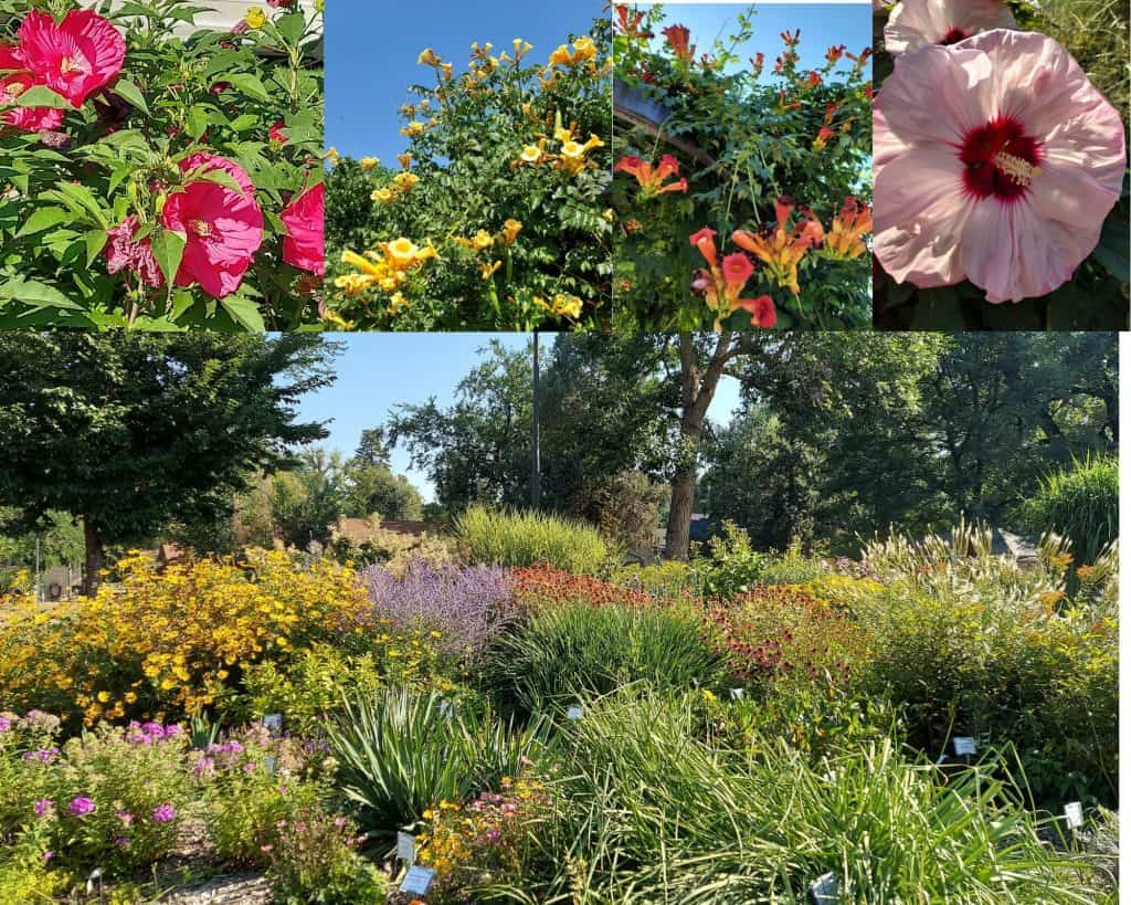 colorado state university perennial garden in fort collins is a beautiful break from brewery visits.