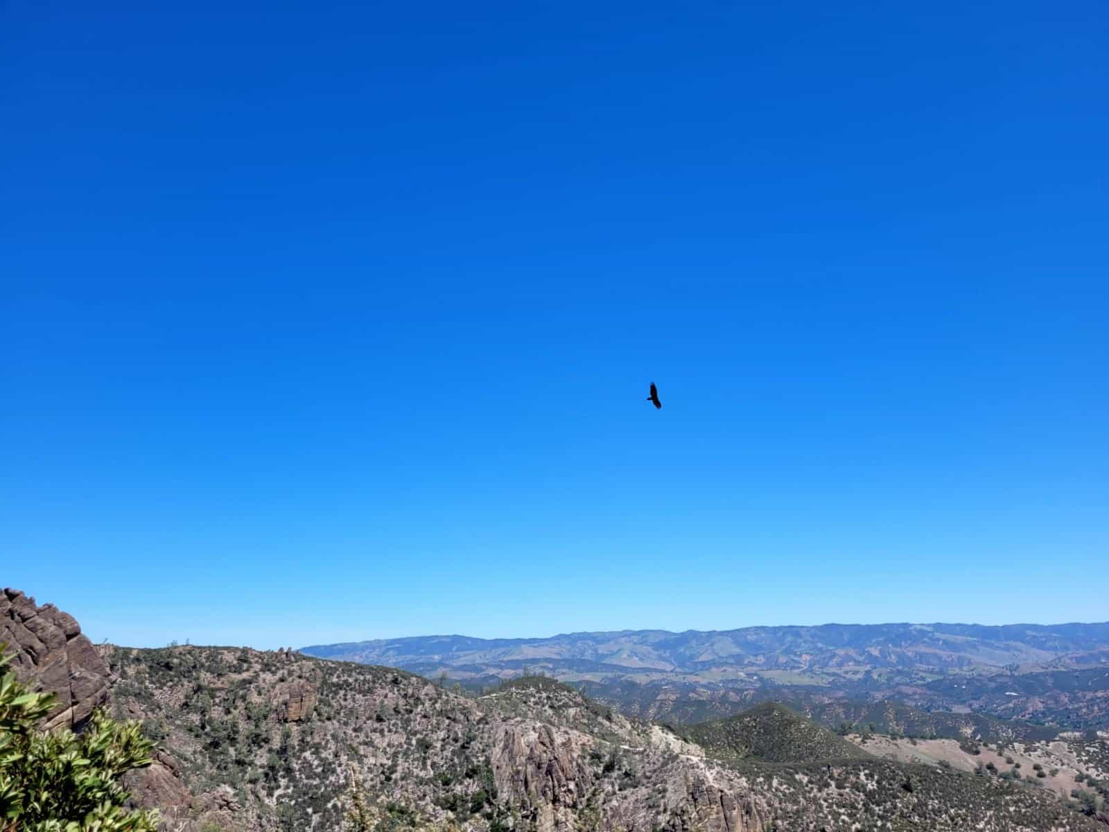 hiking among the raptors at pinnacles national park despite my fear of heights
