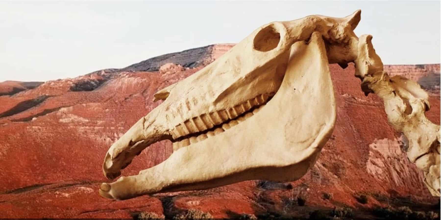 hagerman horse head fossil
