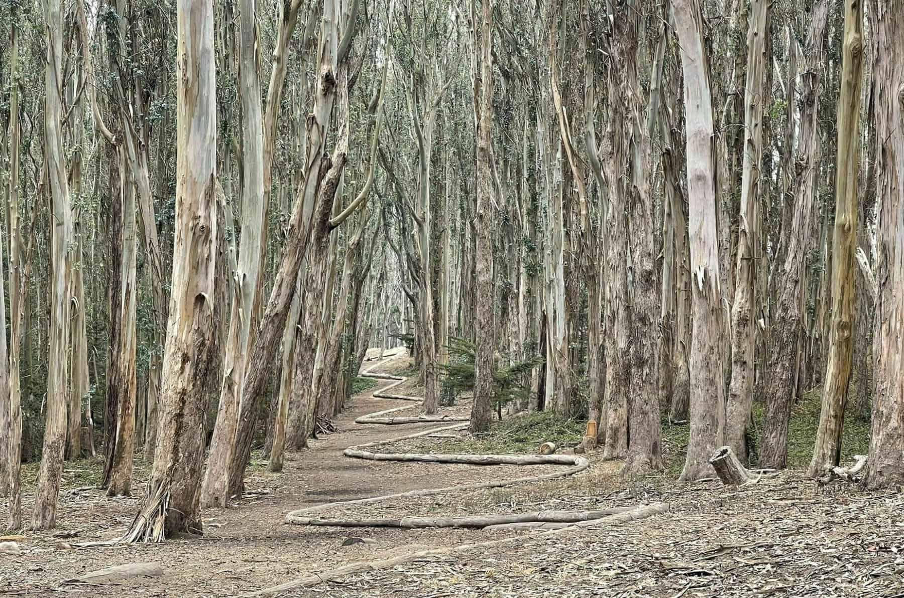 lovers lane wood line trail at presidio