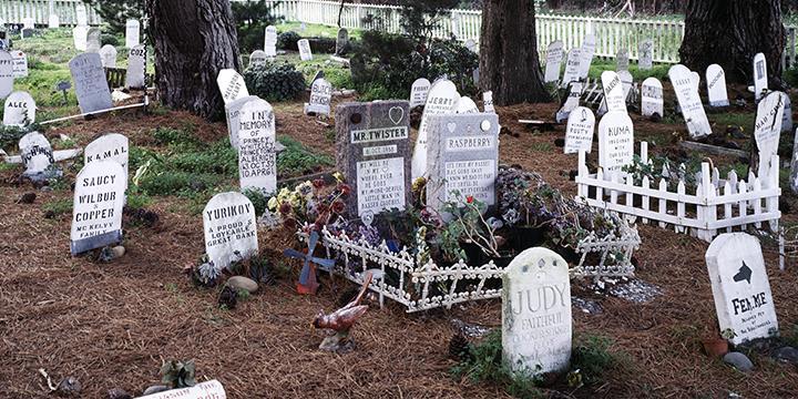 presidio pet cemetery in san francisco