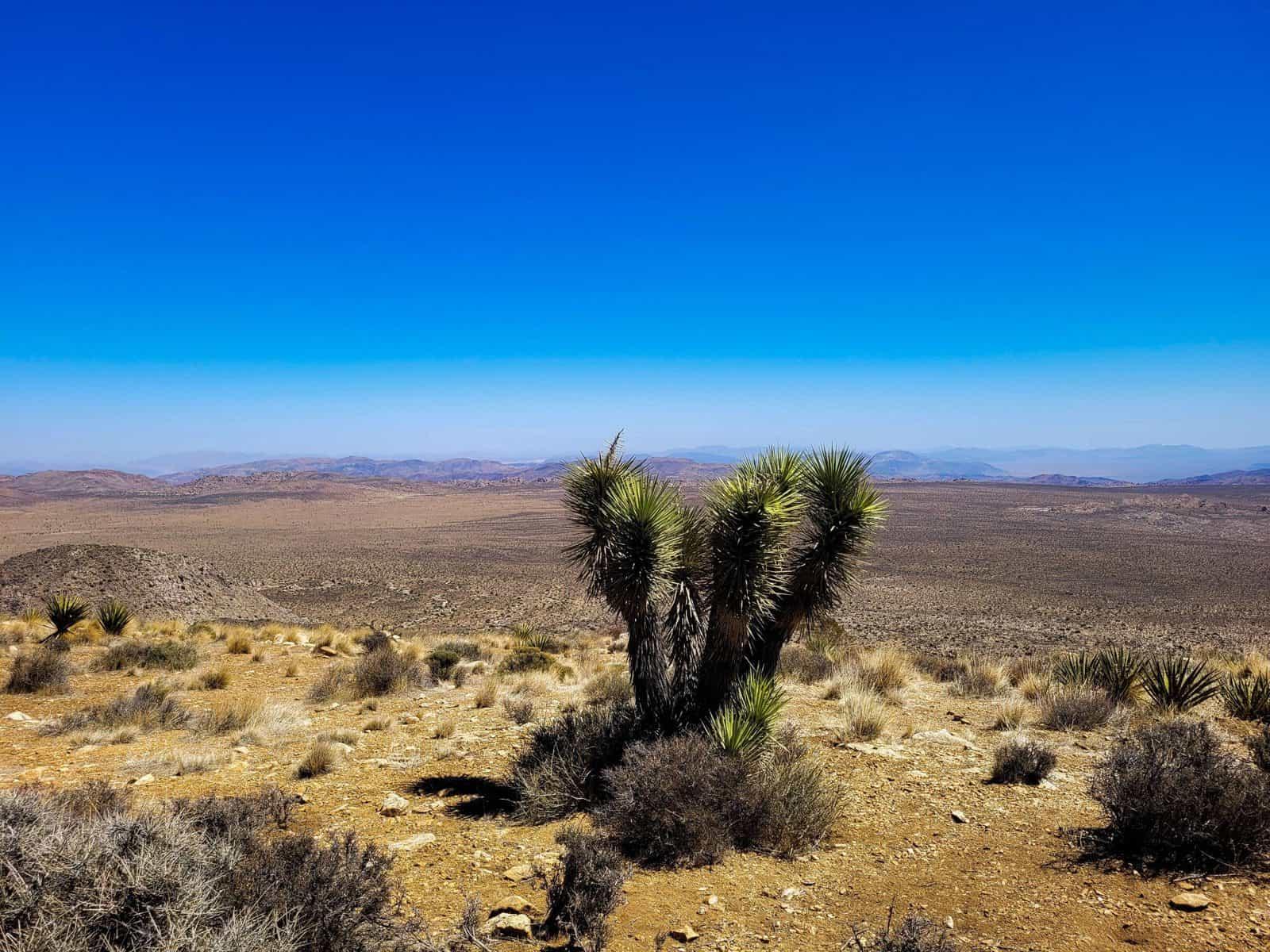 desert views at death valley