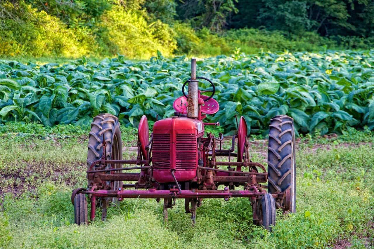 tractor in tobacco field